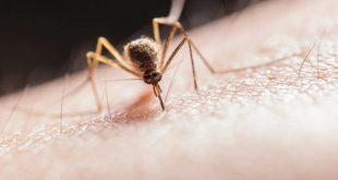 اكتشاف هام قد يوقف انتشار الملاريا عبر خداع البعوض!